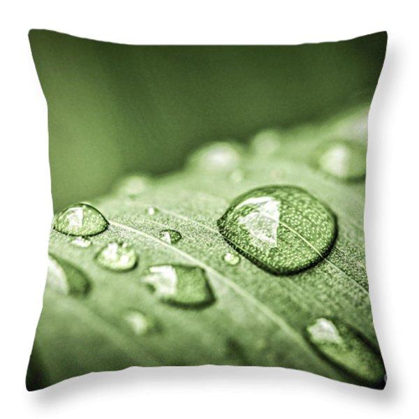 Rain Drops On Green Leaf Throw Pillow by Elena Elisseeva