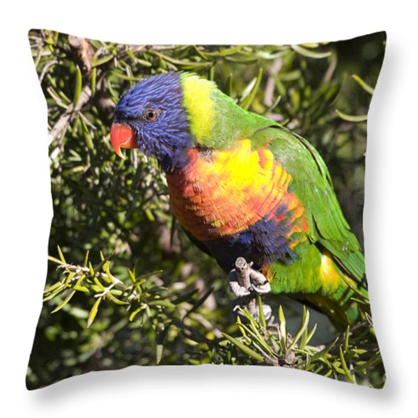 Rainbow Lorikeet Throw Pillow by Steven Ralser
