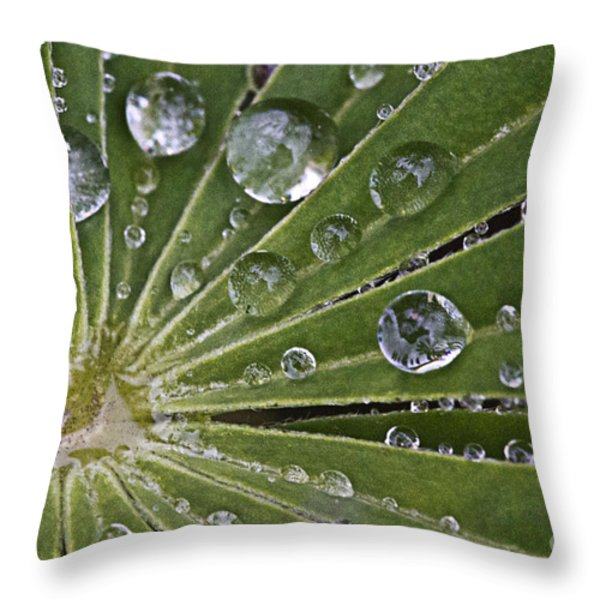 Raindrops On Lupin Leaf Throw Pillow by Heiko Koehrer-Wagner