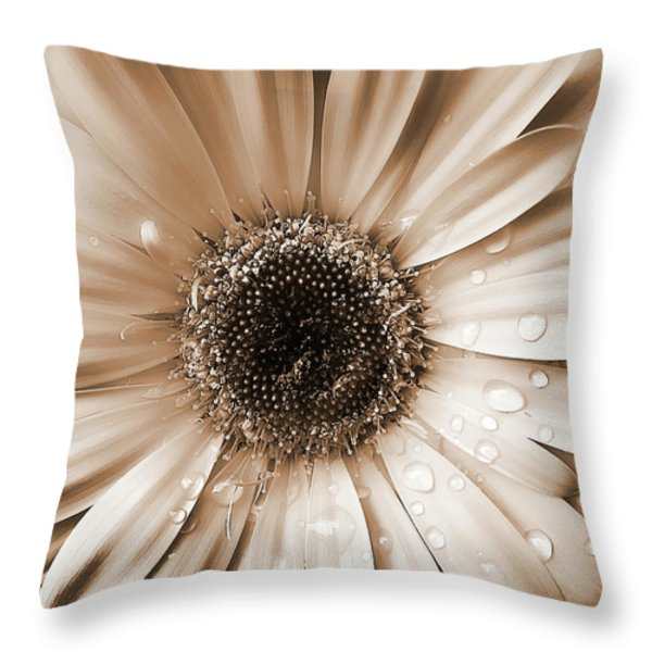 Rainsdrops on Gerber Daisy Sepia Throw Pillow by Jennie Marie Schell