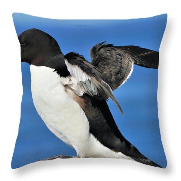 Razorbill Throw Pillow by Tony Beck