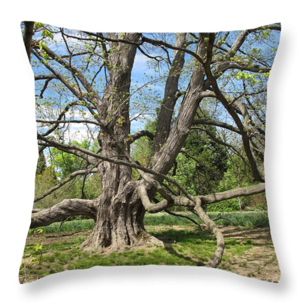 Reaching Out Throw Pillow by Arlene Carmel
