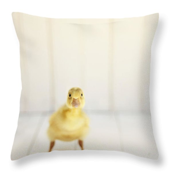 Ready To Rumble Throw Pillow by Amy Tyler