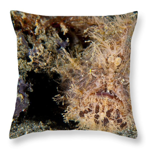 Red And Pink Striated Frogfish Throw Pillow by Steve Jones