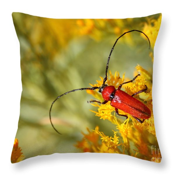 Red Beetle Throw Pillow by Marty Fancy