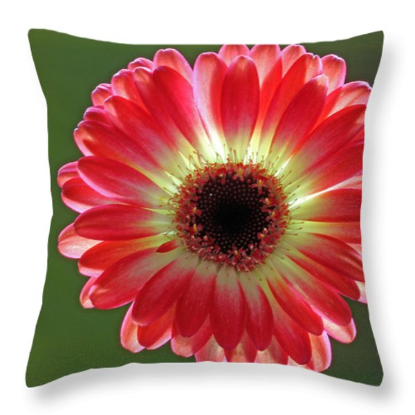 Red Celebration Throw Pillow by Juergen Roth