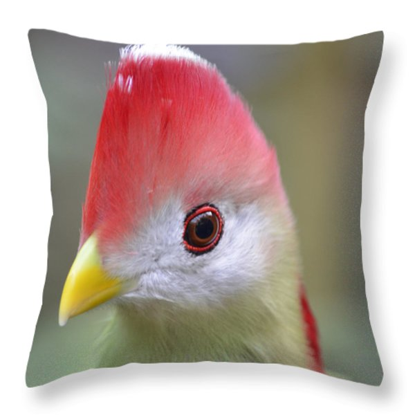 Red Crested Turaco Throw Pillow by Richard Bryce and Family