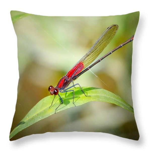 Red Damselfly Throw Pillow by Peggy  Franz