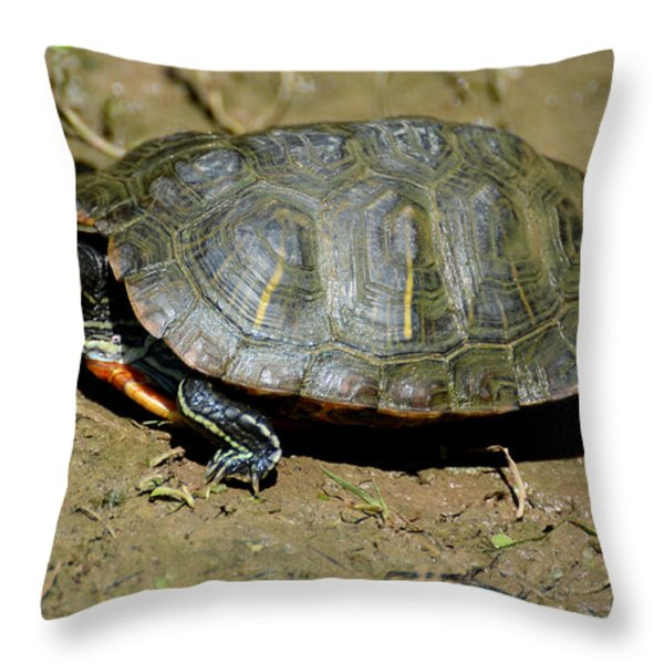 Red Ear Slider Throw Pillow by Todd Hostetter