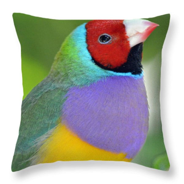 Red Faced Gouldian Finch Throw Pillow by Richard Bryce and Family