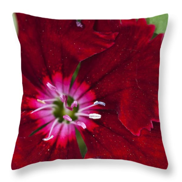 Red Geranium 1 Throw Pillow by Steve Purnell