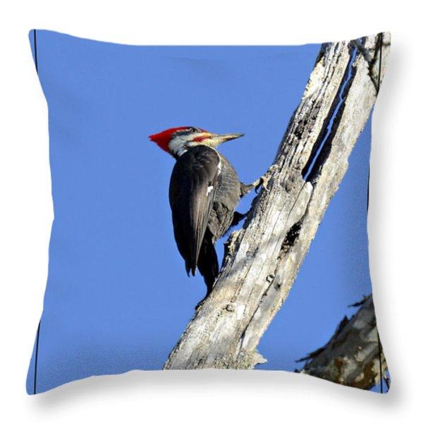 Red Headed Woodpecker Throw Pillow by Susan Leggett