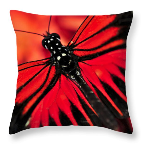 Red heliconius dora butterfly Throw Pillow by Elena Elisseeva