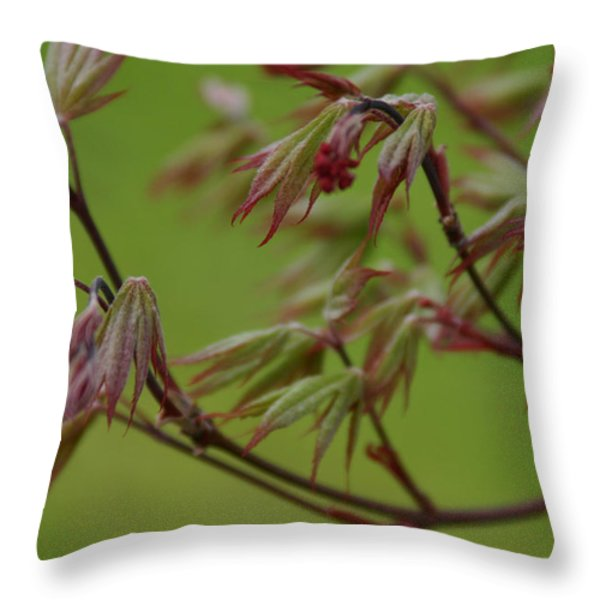 Red Maple Throw Pillow by Kelly Hazel
