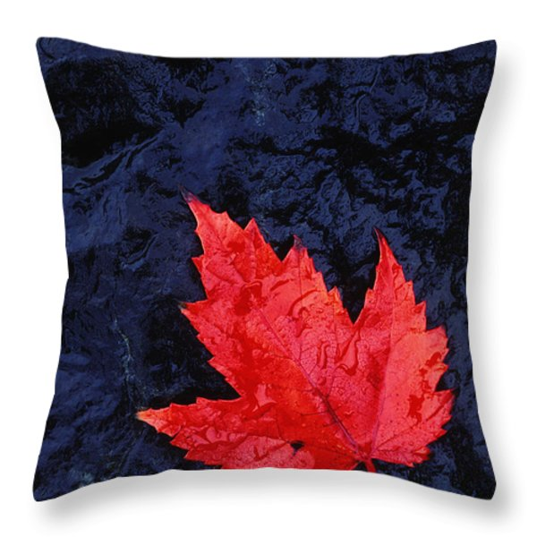 Red Maple Leaf And Black Stone - Fs000222 Throw Pillow by Daniel Dempster