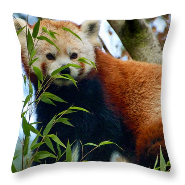 Red Panda Throw Pillow by Trever Miller