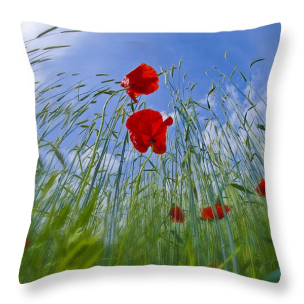 Red Poppies And Blue Sky Throw Pillow by Melanie Viola