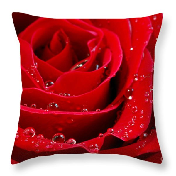 Red rose Throw Pillow by Elena Elisseeva