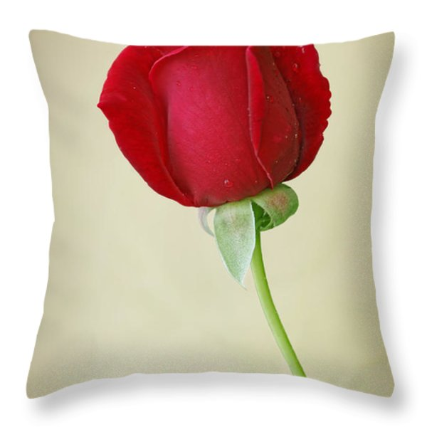 Red Rose On White Throw Pillow by Sandy Keeton