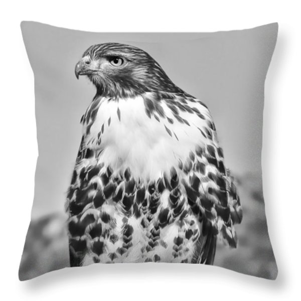 Red Tail Hawk Youth Black And White Throw Pillow by Jennie Marie Schell
