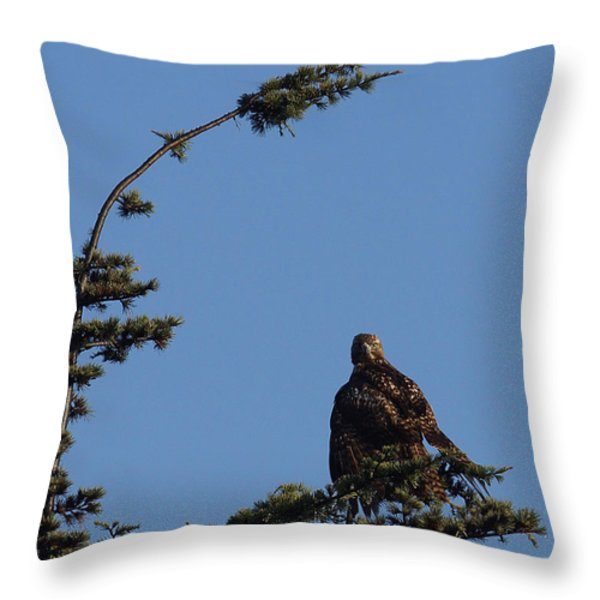 Red Tailed Hawk 2 Throw Pillow by Ernie Echols