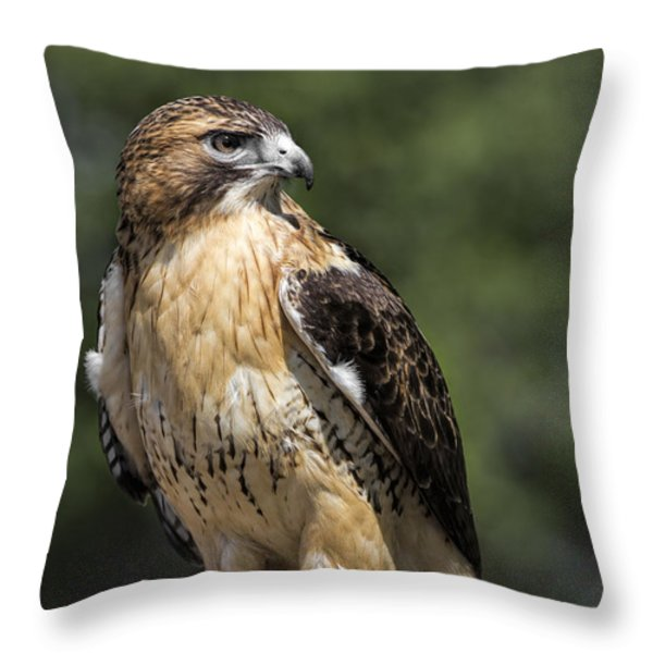 Red Tailed Hawk Throw Pillow by Dale Kincaid