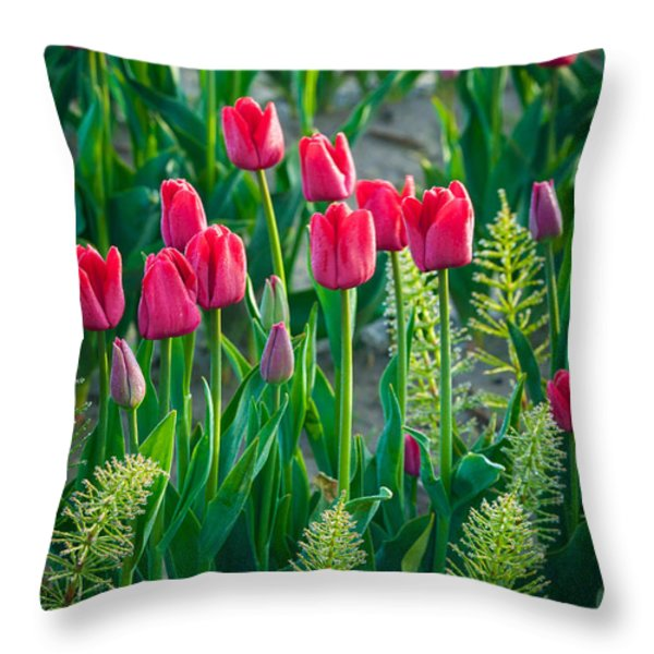 Red tulips in Skagit Valley Throw Pillow by Inge Johnsson