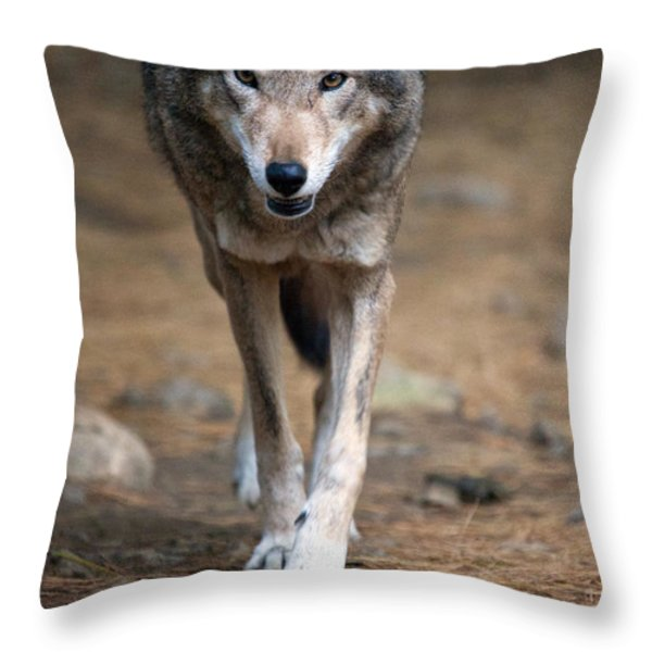 Red Wolf Strut Throw Pillow by Karol Livote