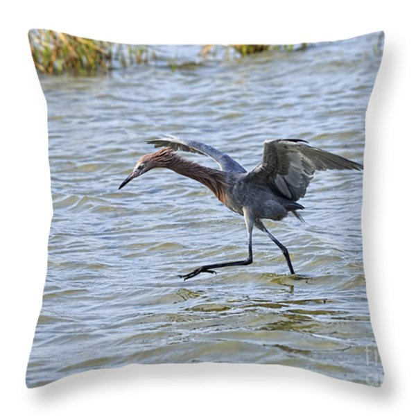 Reddish Egret canopy feeding Throw Pillow by Louise Heusinkveld