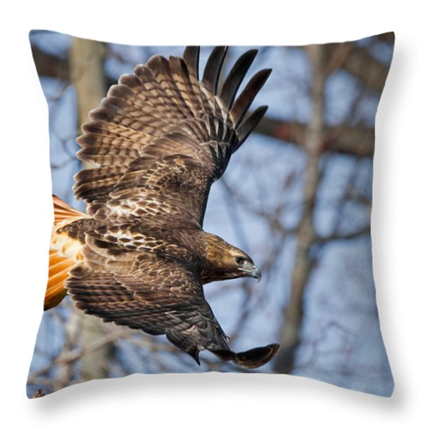 Redtail Hawk Throw Pillow by Bill Wakeley