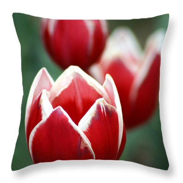 Redwhitetulips6838 Throw Pillow by Gary Gingrich Galleries