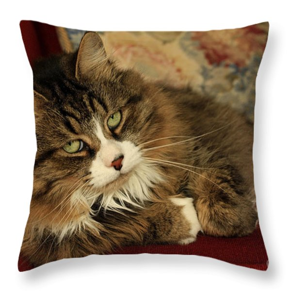 Rescue Cat Living in the Lap of Luxury Throw Pillow by Inspired Nature Photography By Shelley Myke