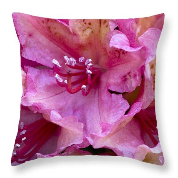 Rhododendron Brasilia Throw Pillow by Frank Tschakert
