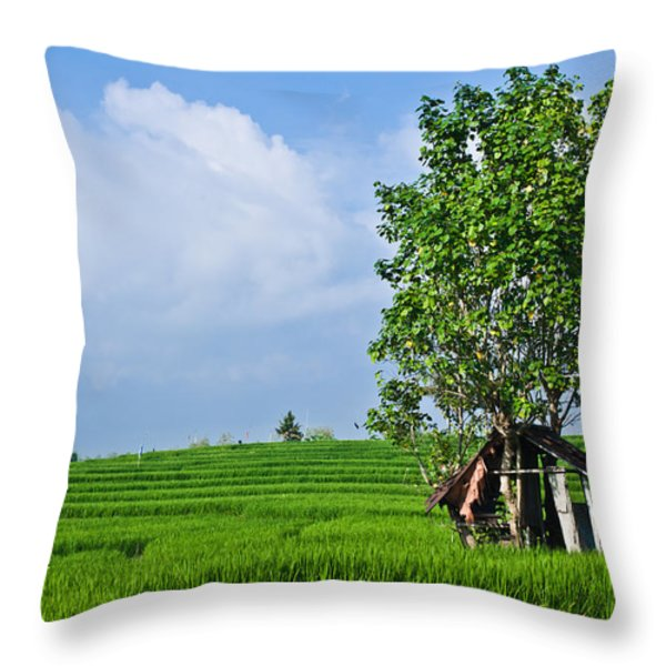 Rice Fields Throw Pillow by Nila Newsom