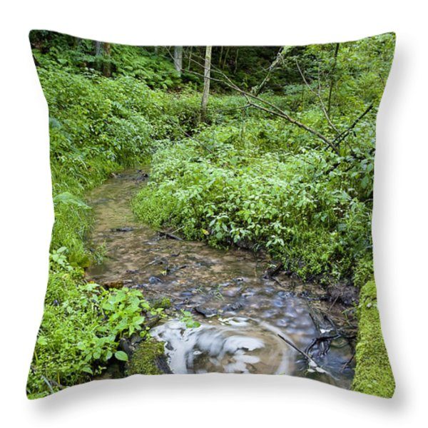 Ridgeway Creek Throw Pillow by Steven Ralser