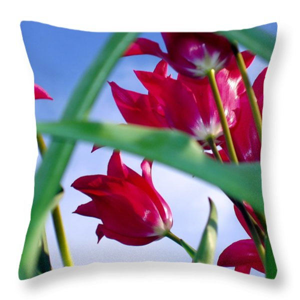 Riding The Wind Throw Pillow by Meaghan Troup