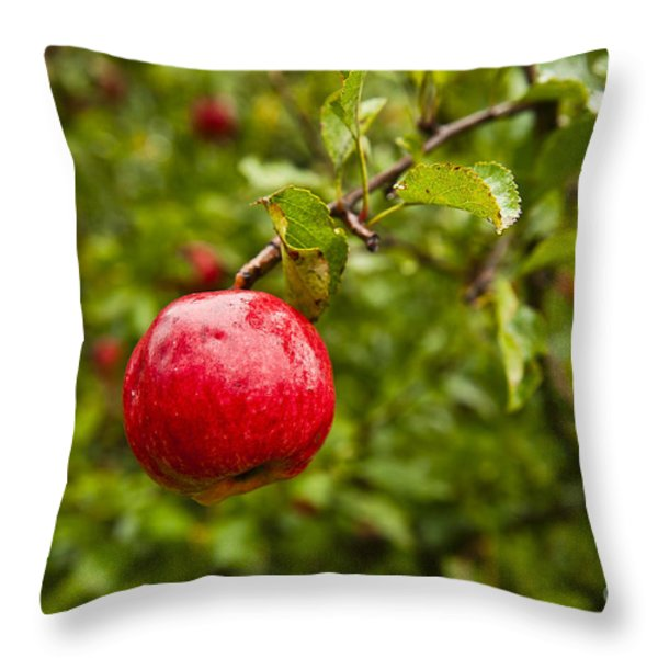 Ripe Apples. Throw Pillow by John Greim