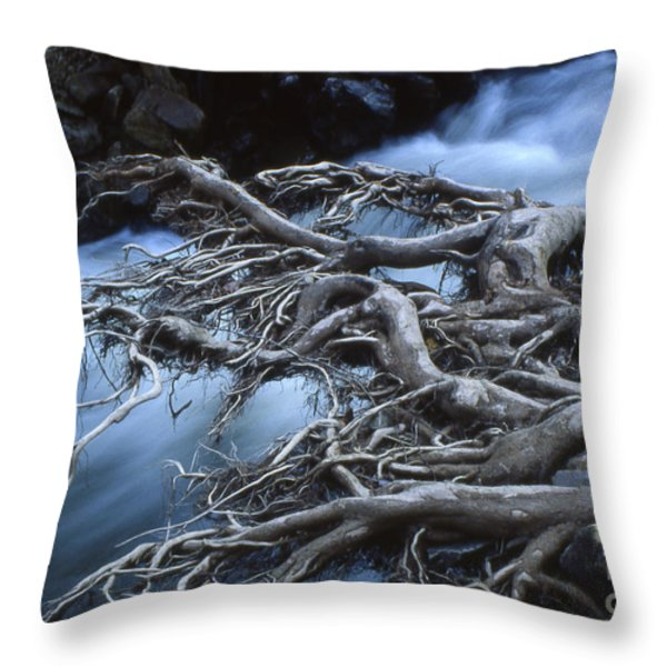 Roots Over Ozark Stream Throw Pillow by Garry McMichael