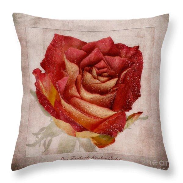 Rosa Floribunda Rainbow Sorbet Throw Pillow by John Edwards