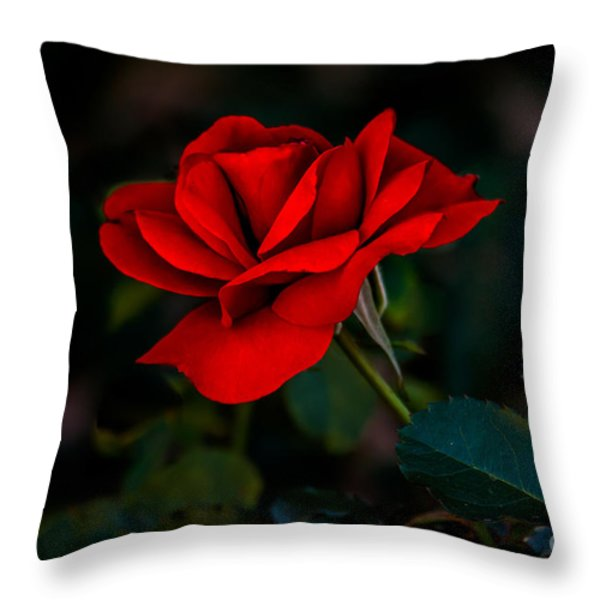 Rose Is A Rose Throw Pillow by Robert Bales
