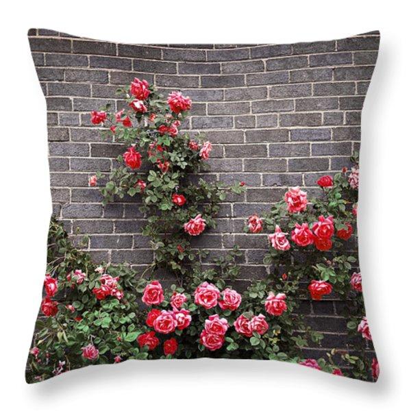 Roses on brick wall Throw Pillow by Elena Elisseeva