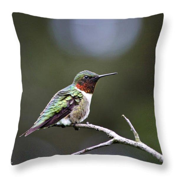Ruby Throated Hummingbird Spotlight Throw Pillow by Christina Rollo