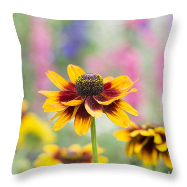 Rudbeckia Hirta Throw Pillow by Tim Gainey