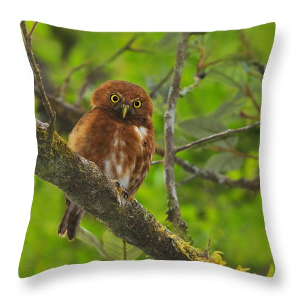 Rufous Morph Costa Rican Pygmy-owl Throw Pillow by Tony Beck