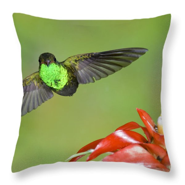 Rufous-tailed Hummer-ecuador Throw Pillow by Anthony Mercieca