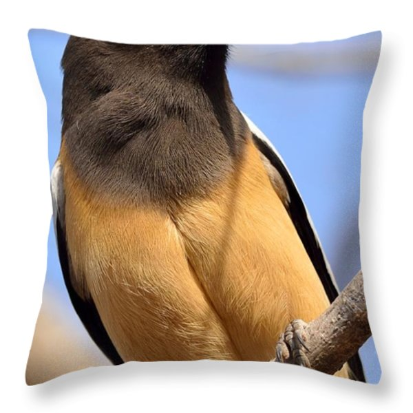 Rufous Treepie. Another Portrait Throw Pillow by Fotosas Photography