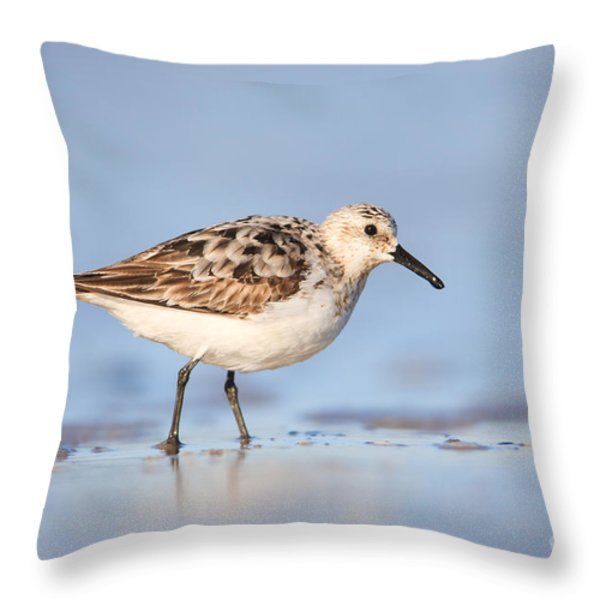 Sanderling Throw Pillow by Clarence Holmes