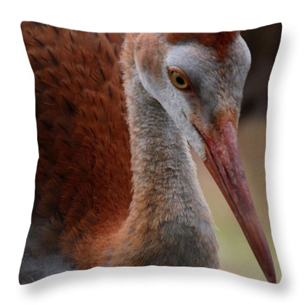 Sandhill Baby Face Throw Pillow by Carol Groenen