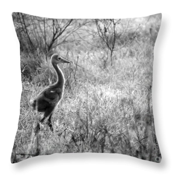 Sandhill Chick In The Marsh - Black And White Throw Pillow by Carol Groenen