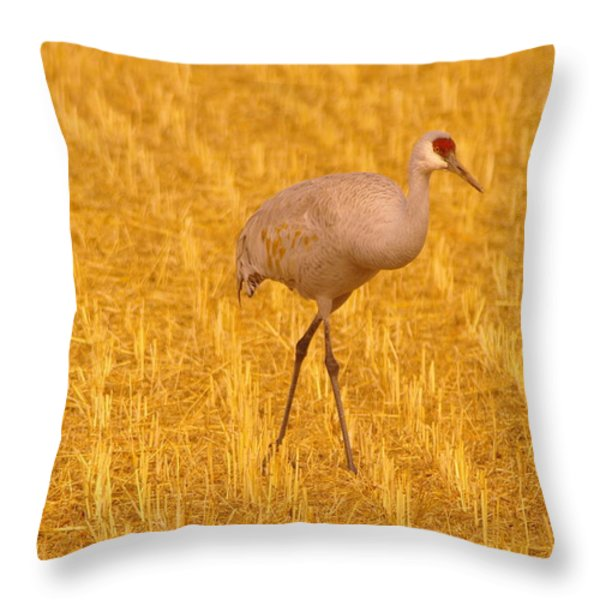 Sandhill Crane Throw Pillow by Jeff  Swan